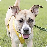 Adopt A Pet :: Rose - Durham, NC