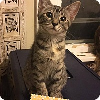 Adopt A Pet :: Marigold - South Bend, IN
