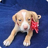 Adopt A Pet :: Emory - Buffalo, NY