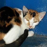 Adopt A Pet :: Sophie - Mexia, TX