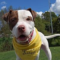 Adopt A Pet :: Dice - Wilmington, DE