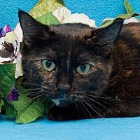 Adopt A Pet :: Freckles - Westland, MI