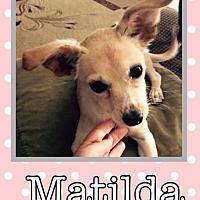 Adopt A Pet :: Matilda - Great Bend, KS