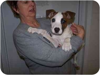 Terrier (Unknown Type, Medium) Mix Puppy for adoption in Shelbyville, Kentucky - Chanel