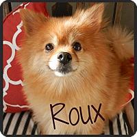 Adopt A Pet :: Roux - Escondido, CA