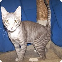 Adopt A Pet :: K-BARC4-Albert - Colorado Springs, CO
