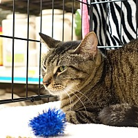 Adopt A Pet :: Crackle - College Station, TX