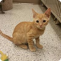 Adopt A Pet :: Sven - Phoenix, AZ