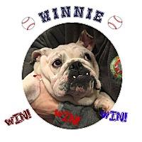 Adopt A Pet :: Winnie - Park Ridge, IL