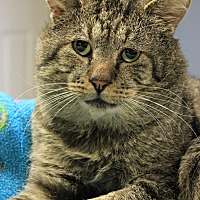 Adopt A Pet :: Robert - New Richmond,, WI
