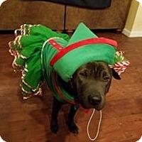 Adopt A Pet :: Starla in TX - adopt pending - Apple Valley, CA