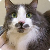 Domestic Longhair Cat for adoption in Verona, Wisconsin - Hercule and Aggie - bonded pair