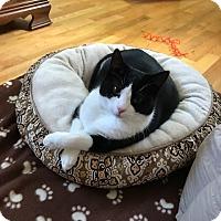 Adopt A Pet :: Melody - Whitehall, PA