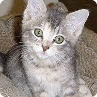 Adopt A Pet :: Rory - Buhl, ID