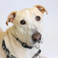 Adopt A Pet :: Max - Richmond, VA