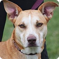 Adopt A Pet :: Rowdy - Huntley, IL
