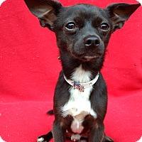 Adopt A Pet :: Merlin - Charlotte, NC
