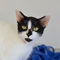 Adopt A Pet :: Cookie Dough - Delaware, OH