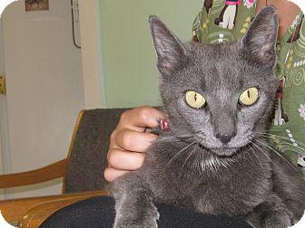 Domestic Shorthair Cat for adoption in Warwick, Rhode Island - Juliette