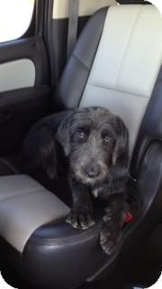Terrier (Unknown Type, Medium) Mix Dog for adoption in Snyder, Texas - Marley