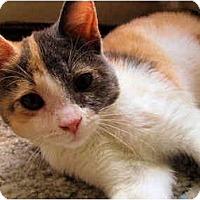 Adopt A Pet :: Lisa - Davis, CA