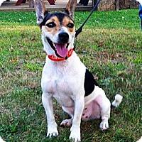 Adopt A Pet :: Ripley - Leetonia, OH