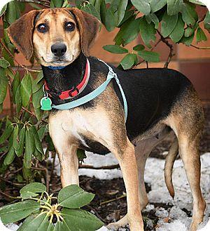 Hound (Unknown Type) Mix Dog for adoption in Port Washington, New York - Edina