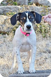Hound (Unknown Type) Mix Puppy for adoption in Parkville, Missouri - Noel'