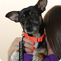 Adopt A Pet :: Inigo Montoya - Mission Viejo, CA