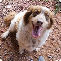 Adopt A Pet :: Inky-Dinky - dewey, AZ