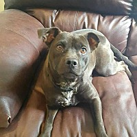 Terrier (Unknown Type, Medium) Mix Dog for adoption in Elwood, Indiana - Mocha
