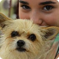 Adopt A Pet :: Tannie - Ogden, UT
