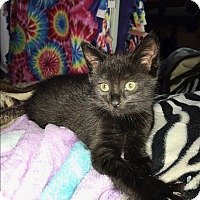 Adopt A Pet :: Misty and Shadow - Mission Viejo, CA