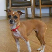 Adopt A Pet :: Pico - Carsonville, MI