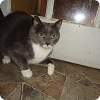 Adopt A Pet :: Twix - Breinigsville, PA