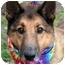 Photo 1 - Collie/Shepherd (Unknown Type) Mix Dog for adoption in Cincinnati, Ohio - Austin