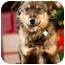 Photo 1 - Australian Shepherd Mix Dog for adoption in Portland, Oregon - Samantha