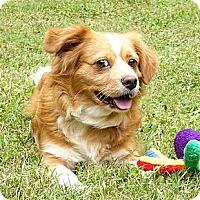 Adopt A Pet :: Rolly - Mocksville, NC