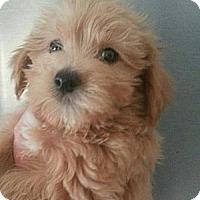 Adopt A Pet :: COOKIE - Silver Lake, WI