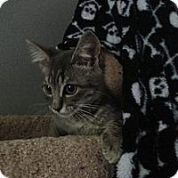 Adopt A Pet :: Wess - Monroe, GA