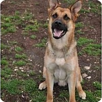 Adopt A Pet :: Dozer - Hamilton, MT