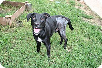 Hound (Unknown Type) Mix Dog for adoption in San Antonio, Texas - Ernie