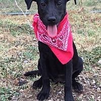 Adopt A Pet :: Ziggi - Comanche, TX