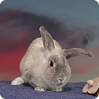Adopt A Pet :: Chardonnay - Marietta, GA