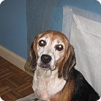 Adopt A Pet :: Tilly - Allentown, PA