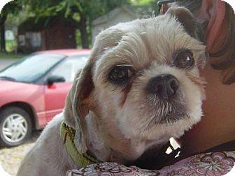 Lhasa Apso Dog for adoption in Cushing, Oklahoma - LADY adopted
