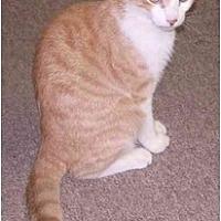 Adopt A Pet :: Wilbur - Dale City, VA
