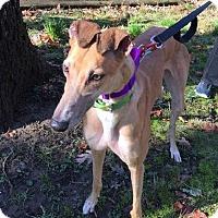 Adopt A Pet :: Dot - Spencerville, MD