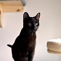 Adopt A Pet :: Aurora - Santa Monica, CA