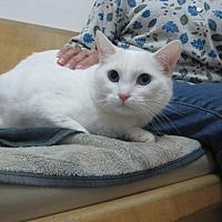 Adopt A Pet :: Casper - Upland, CA